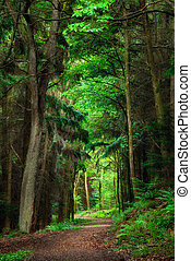 Dreamy scenery in the forest with a path leading into bright...