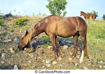 Horse and foal - Horses grazing in the mountains early in...