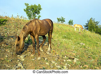 Horses grazing in the mountains early morning - Horses...