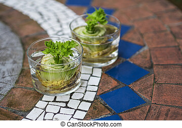 regrowing celery from leftovers - How to regrow celery from...