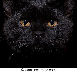 black cat on black - Close-up shot of a black cat with...