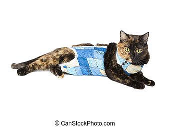 gato, Carey, Color, después, Operación,...