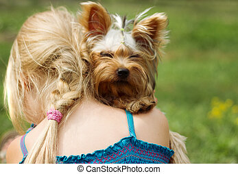 Yorkshire terrier on shoulder of 6 year old girl. looking...