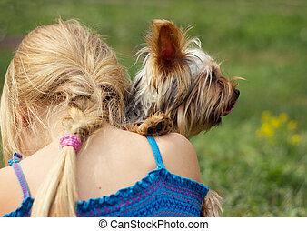 Yorkshire terrier on shoulder of 6 year old girl looking to...