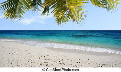 White sand tropical beach