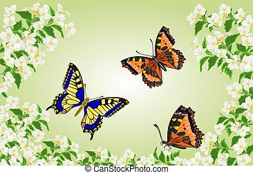 Butterflies Swallowtail and Vanessa in jasmine trees...
