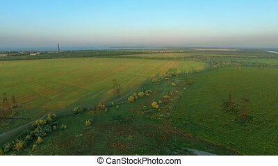 Field of Sunflowers at Sunrise. Aerial Survey - The flight...