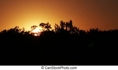 Sunset over the trees - The orange sun is setting behind the...
