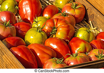 tomatoes, old cultivars