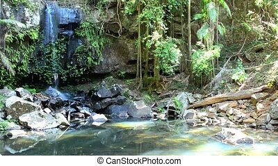 Curtis Falls in Mount Tamborine rain forest in Gold Coast...