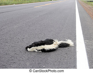 Roadkill Skunk on a Highway - Dead Skunk on a highway is a...