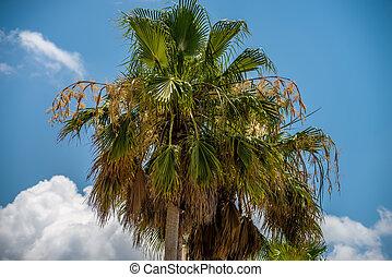Palmetto tree set against a Carolina blue sky