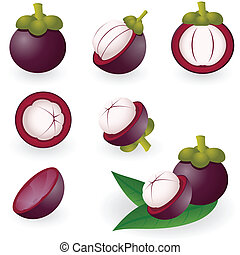 Mangosteen - Vector illustration of mangosteen