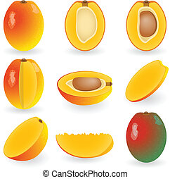 Mango - Vector illustration of mango