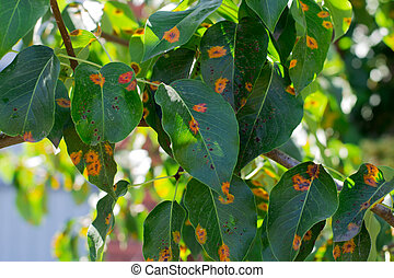 leaves of the plant disease