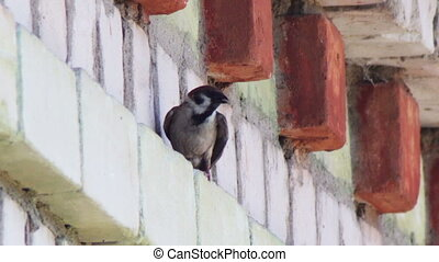 A swallow sitting on a brick building. - Black with white...