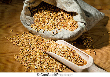 grains of oats yields for cereals in agriculture