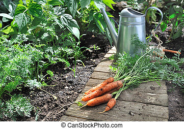 vegetable garden with watering can and carrots