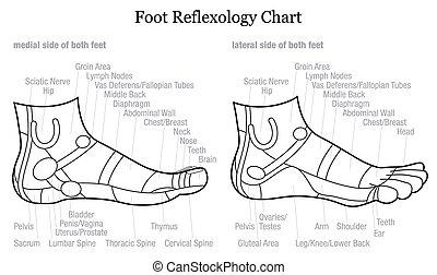 Foot reflexology chart - GERMAN - Foot reflexology chart -...