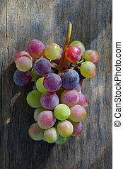 Unripe grapes with dew drops