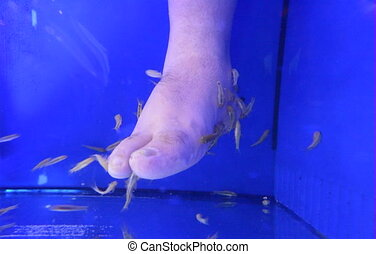 Mans leg receive Ichthyotherapy from garra rufa fish - Man...