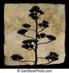 agave plant silhouette - Agave americana century plant in...
