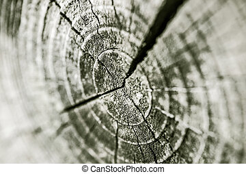 Concentric rings of a trunk - Macro of concentric rings of a...