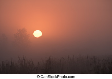 Sun up Fog - The sun has come up over the marsh and through...