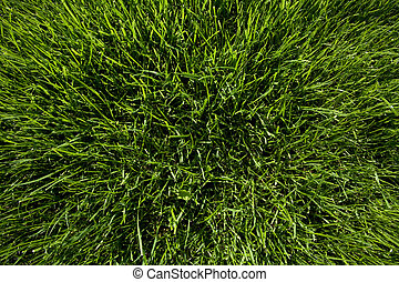 lawn - Wide angle green lawn meadow soil surface