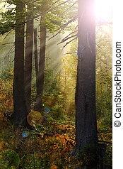 magic light in the woods