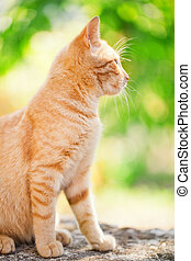 Domestic cat outdoors
