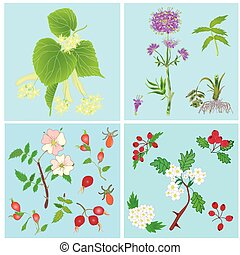 Set of officinal plants- linden, valerian, dog rose,...