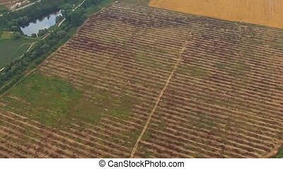 Agricultural Fields At Beautiful Hilly Terrain Birds Eye -...
