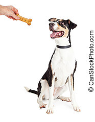 Happy Dog Being Rewarded With Treat - Happy and obedient dog...