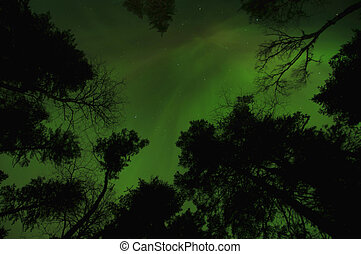 Northern Lights in Ontario