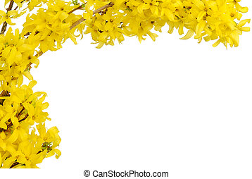Yellow spring blossoms border - White copy space bordered...