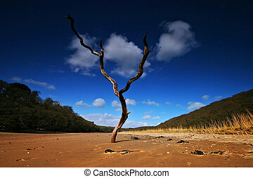 Dead tree in the sand on the bank of Erme Estuary - This...