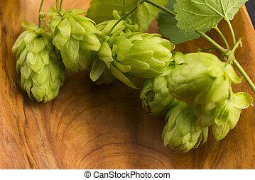 Fresh green hop cones