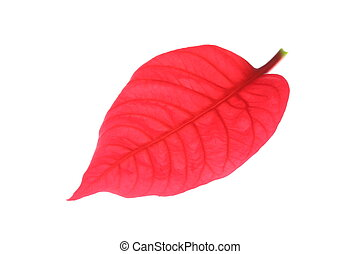 red leaf of poinsettia christmas tree