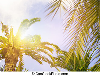 Green palm leaves on blue sky background.