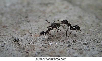Three ants trying to identify each other