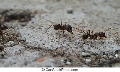 Ant looking around - An ant looking around