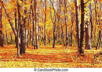 otoño, bosque, camino
