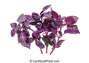 Several branches of basil on a light background - Several...