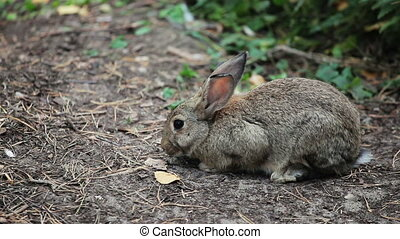 Big Grey Rabbit sniffs