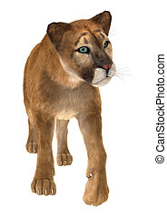 Puma - 3D digital render of a big cat puma isolated on white...