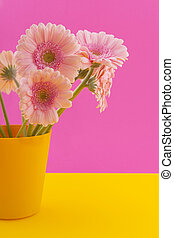 Pink Gerber on yellow - Bouquet pink Gerber on colorful...