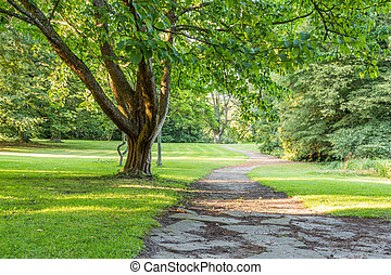 beautiful tree in green park with pathway vertical