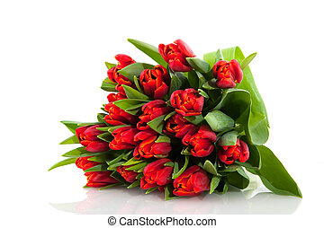 Bouquet red tulips - bouquet red tulips on a white...