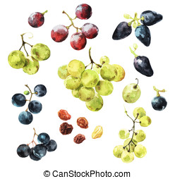 All Sweet and Mighty Grapes - Watercolour illustrations of...